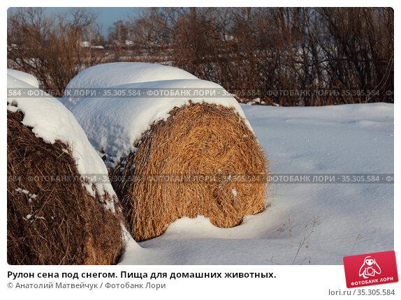 Рулон сена под снегом. Пища для домашних животных. Стоковое фото, фотограф Анатолий Матвейчук / Фотобанк Лори