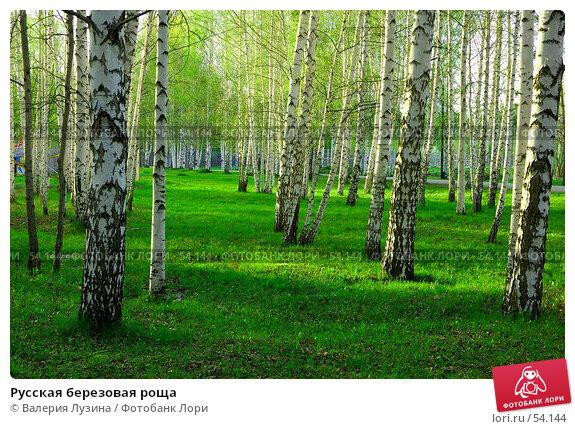 Русская березовая роща, фото № 54144, снято 20 мая 2007 г. (c) Валерия Потапова / Фотобанк Лори