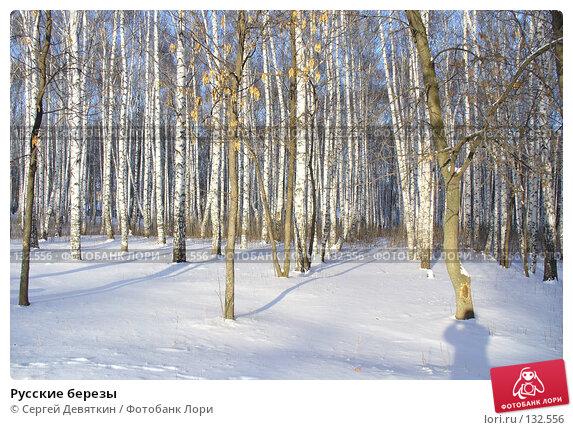 Русские березы, фото № 132556, снято 25 ноября 2007 г. (c) Сергей Девяткин / Фотобанк Лори