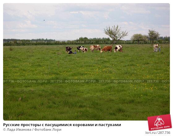 Русские просторы с пасущимися коровами и пастухами, фото № 287736, снято 9 мая 2008 г. (c) Лада Иванова / Фотобанк Лори