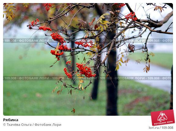 Рябина, фото № 109008, снято 19 октября 2007 г. (c) Ткачёва Ольга / Фотобанк Лори