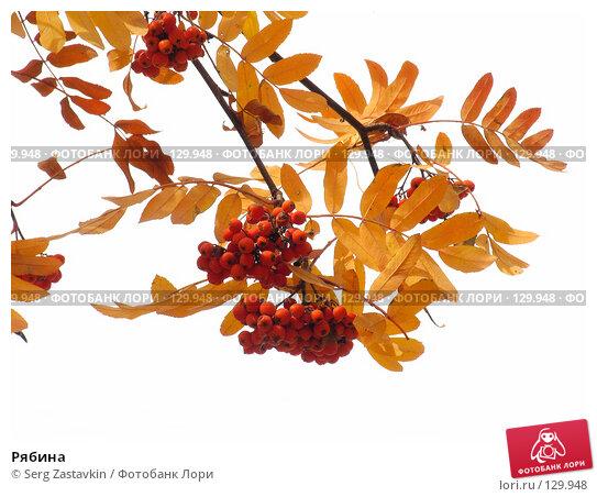 Рябина, фото № 129948, снято 3 октября 2004 г. (c) Serg Zastavkin / Фотобанк Лори