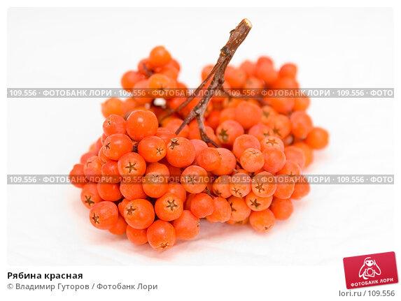 Рябина красная, фото № 109556, снято 2 ноября 2007 г. (c) Владимир Гуторов / Фотобанк Лори