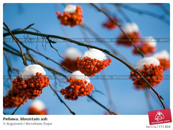 Рябина. Mountain ash, фото № 111804, снято 5 ноября 2006 г. (c) Argument / Фотобанк Лори
