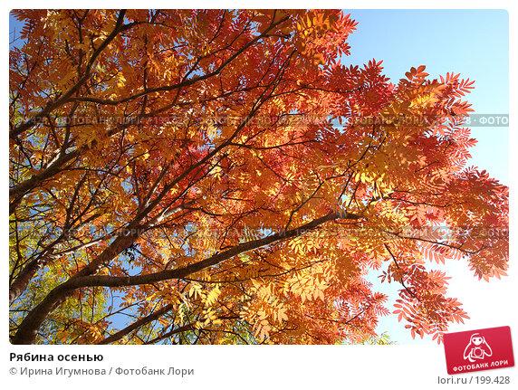 Рябина осенью, фото № 199428, снято 7 октября 2007 г. (c) Ирина Игумнова / Фотобанк Лори