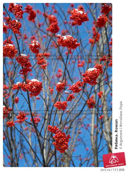 Рябина. Rowan, фото № 111808, снято 5 ноября 2006 г. (c) Argument / Фотобанк Лори