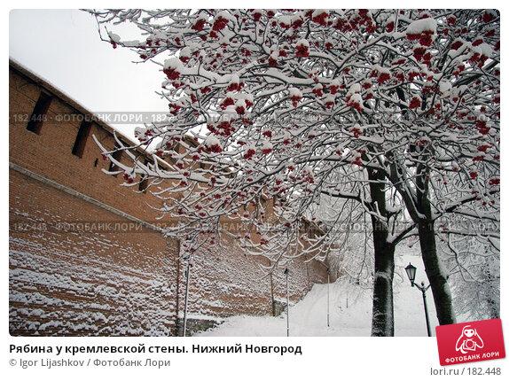 Рябина у кремлевской стены. Нижний Новгород, фото № 182448, снято 11 ноября 2006 г. (c) Igor Lijashkov / Фотобанк Лори
