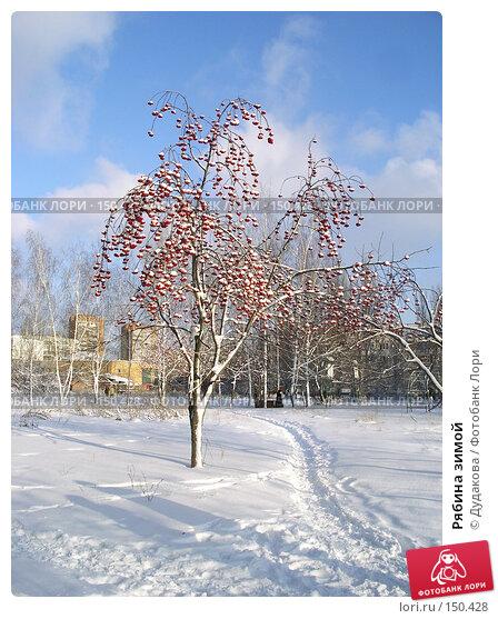 Рябина зимой, фото № 150428, снято 2 декабря 2007 г. (c) Дудакова / Фотобанк Лори