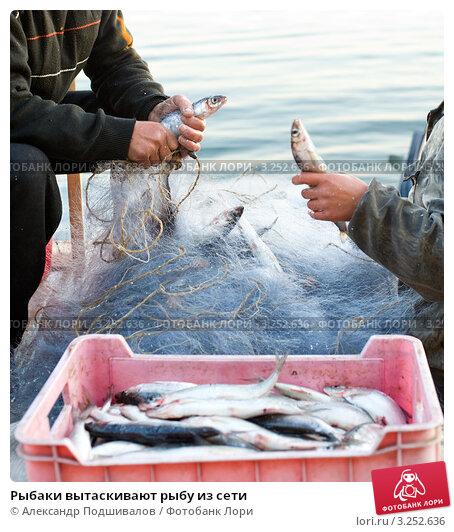 рыбак вытаскивает сеть