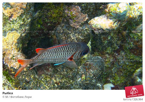 Купить «Рыбка», фото № 326964, снято 23 марта 2018 г. (c) М / Фотобанк Лори