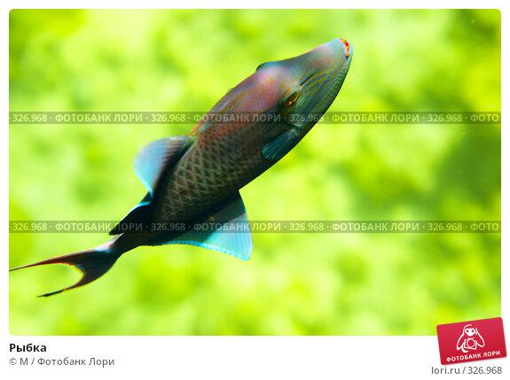 Купить «Рыбка», фото № 326968, снято 22 ноября 2017 г. (c) Михаил / Фотобанк Лори