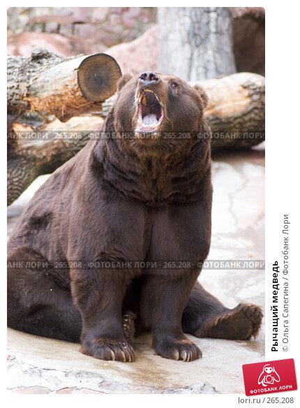 Рычащий медведь, фото № 265208, снято 17 октября 2007 г. (c) Ольга Сапегина / Фотобанк Лори