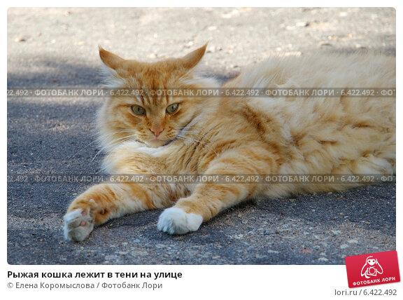 Купить «Рыжая кошка лежит в тени на улице», эксклюзивное фото № 6422492, снято 27 августа 2014 г. (c) Елена Коромыслова / Фотобанк Лори