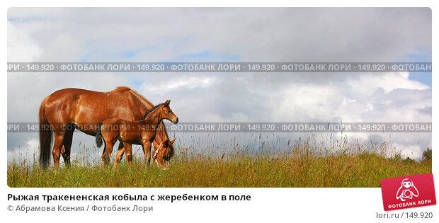 Рыжая тракененская кобыла с жеребенком в поле, фото № 149920, снято 27 марта 2017 г. (c) Абрамова Ксения / Фотобанк Лори