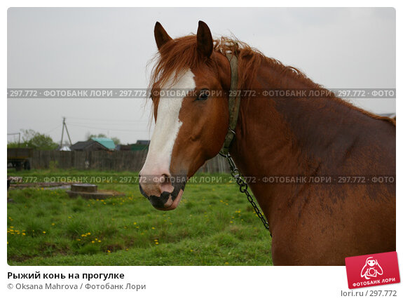 Рыжий конь на прогулке, фото № 297772, снято 18 мая 2008 г. (c) Oksana Mahrova / Фотобанк Лори