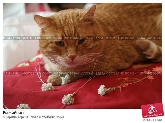 Рыжий кот, эксклюзивное фото № 1584, снято 10 сентября 2005 г. (c) Ирина Терентьева / Фотобанк Лори