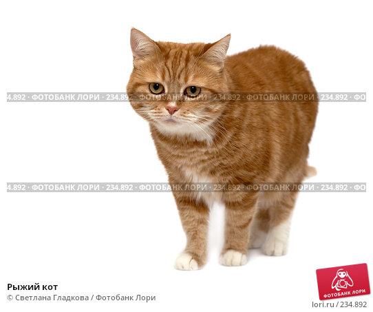 Рыжий кот, фото № 234892, снято 24 марта 2017 г. (c) Cветлана Гладкова / Фотобанк Лори
