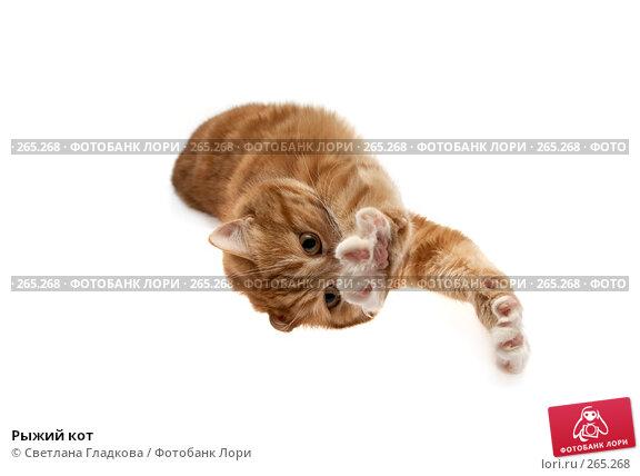 Рыжий кот, фото № 265268, снято 8 апреля 2008 г. (c) Cветлана Гладкова / Фотобанк Лори
