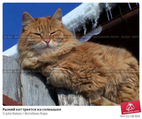 Рыжий кот греется на солнышке, фото № 26924, снято 18 января 2005 г. (c) Julia Nelson / Фотобанк Лори