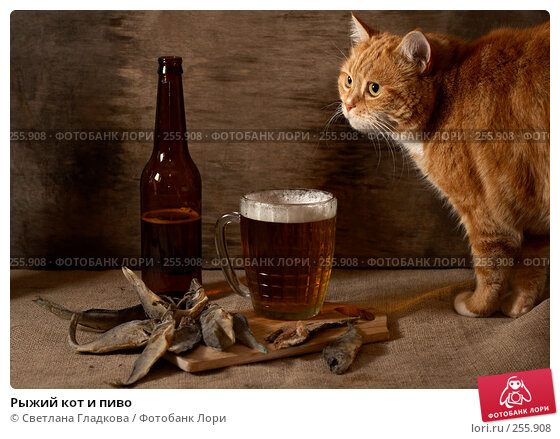 Рыжий кот и пиво, фото № 255908, снято 30 сентября 2007 г. (c) Cветлана Гладкова / Фотобанк Лори