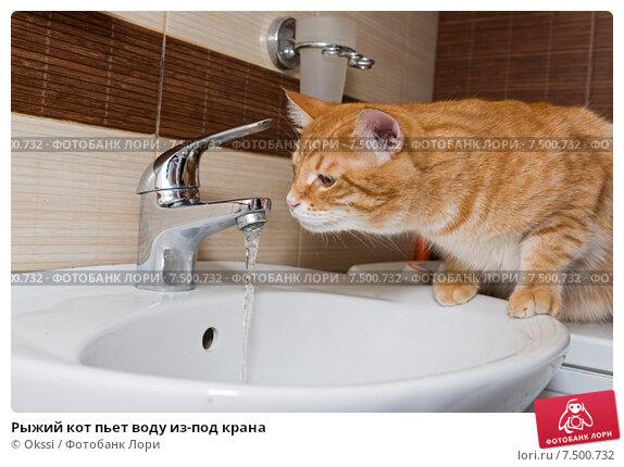 Купить «Рыжий кот пьет воду из-под крана», фото № 7500732, снято 1 мая 2015 г. (c) Okssi / Фотобанк Лори