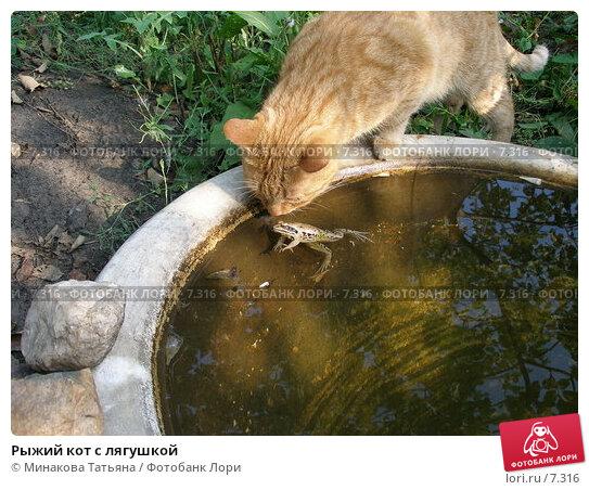 Рыжий кот с лягушкой, фото № 7316, снято 14 августа 2005 г. (c) Минакова Татьяна / Фотобанк Лори