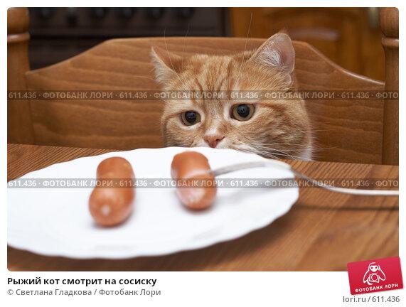 Купить «Рыжий кот смотрит на сосиску», фото № 611436, снято 11 декабря 2008 г. (c) Cветлана Гладкова / Фотобанк Лори