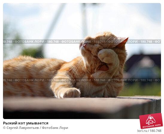 Рыжий кот умывается, фото № 180748, снято 2 января 2005 г. (c) Сергей Лаврентьев / Фотобанк Лори