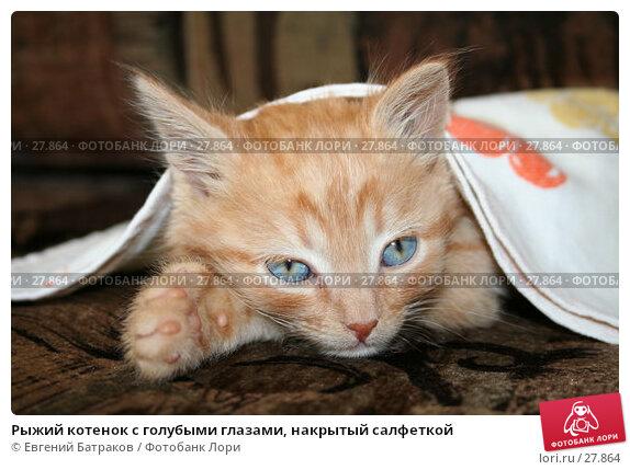 Рыжий котенок с голубыми глазами, накрытый салфеткой, фото № 27864, снято 30 июля 2006 г. (c) Евгений Батраков / Фотобанк Лори
