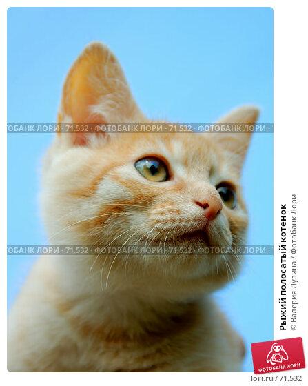 Рыжий полосатый котенок, фото № 71532, снято 8 июля 2007 г. (c) Валерия Потапова / Фотобанк Лори