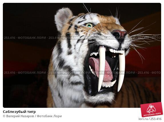 Саблезубый тигр, фото № 253416, снято 6 апреля 2008 г. (c) Валерий Назаров / Фотобанк Лори