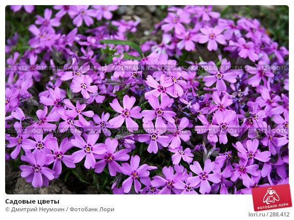 Садовые цветы, эксклюзивное фото № 288412, снято 22 апреля 2008 г. (c) Дмитрий Нейман / Фотобанк Лори