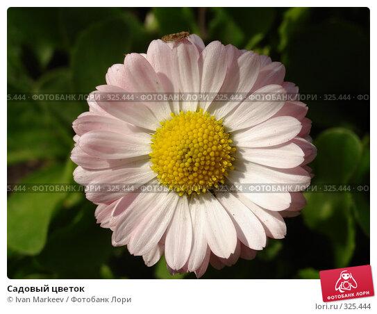 Садовый цветок, фото № 325444, снято 14 июня 2008 г. (c) Василий Каргандюм / Фотобанк Лори