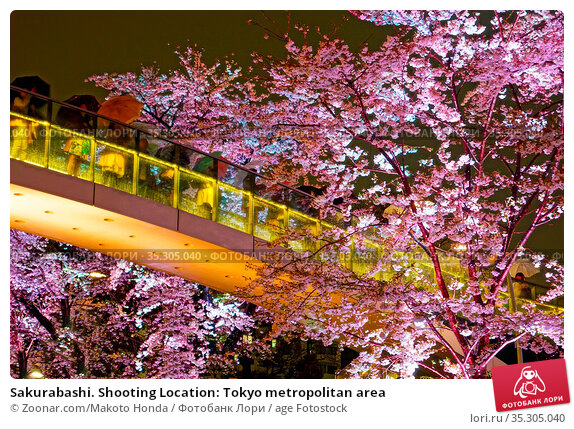 Sakurabashi. Shooting Location: Tokyo metropolitan area. Стоковое фото, фотограф Zoonar.com/Makoto Honda / age Fotostock / Фотобанк Лори