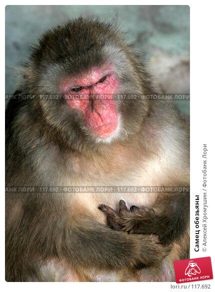 Самец обезьяны, фото № 117692, снято 28 сентября 2006 г. (c) Алексей Хромушин / Фотобанк Лори