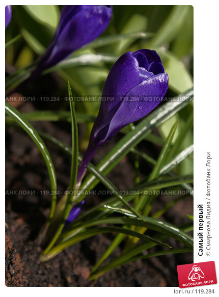 Самый первый, фото № 119284, снято 12 апреля 2007 г. (c) Смирнова Лидия / Фотобанк Лори