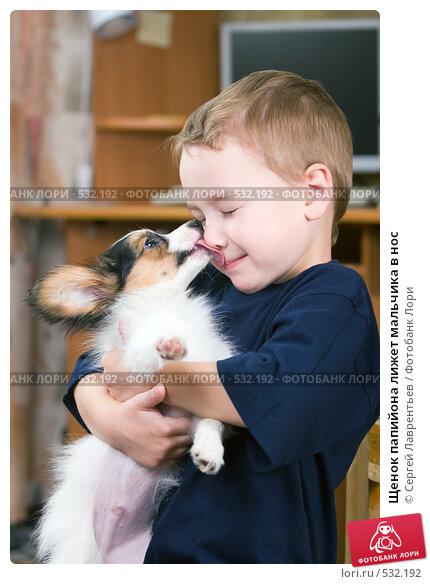 Купить «Щенок папийона лижет мальчика в нос», фото № 532192, снято 29 октября 2008 г. (c) Сергей Лаврентьев / Фотобанк Лори