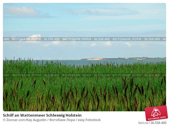 Schilf an Wattenmeer Schleswig Holstein. Стоковое фото, фотограф Zoonar.com/Kay Augustin / easy Fotostock / Фотобанк Лори