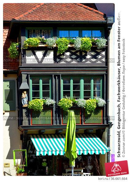 Schwarzwald, Gengenbach, Fachwerkhäuser, Blumen am Fenster außen, Стоковое фото, фотограф Zoonar.com/© Bildagentur Geduldig / easy Fotostock / Фотобанк Лори