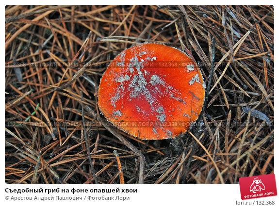 Съедобный гриб на фоне опавшей хвои, фото № 132368, снято 5 ноября 2007 г. (c) Арестов Андрей Павлович / Фотобанк Лори