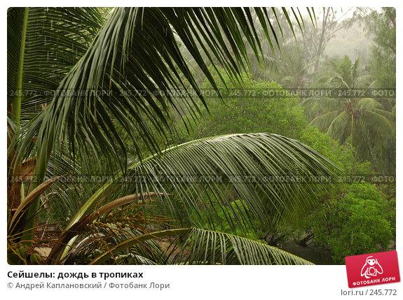 Сейшелы: дождь в тропиках, фото № 245772, снято 31 августа 2007 г. (c) Андрей Каплановский / Фотобанк Лори