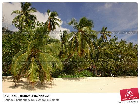 Сейшелы: пальмы на пляже, фото № 245712, снято 28 августа 2007 г. (c) Андрей Каплановский / Фотобанк Лори