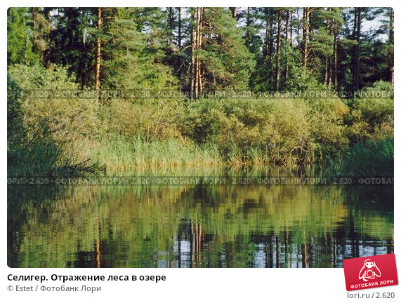 Селигер. Отражение леса в озере, фото № 2620, снято 27 апреля 2017 г. (c) Estet / Фотобанк Лори