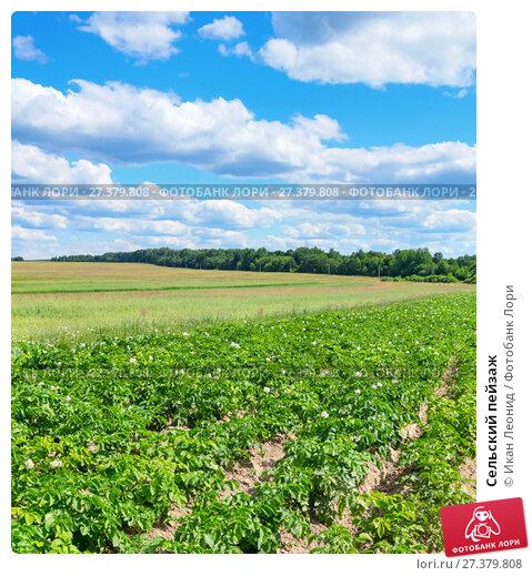 Купить «Сельский пейзаж», фото № 27379808, снято 22 июля 2017 г. (c) Икан Леонид / Фотобанк Лори
