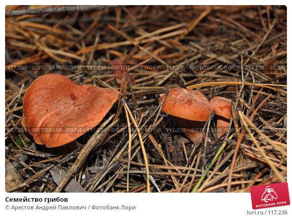 Семейство грибов, фото № 117236, снято 4 ноября 2007 г. (c) Арестов Андрей Павлович / Фотобанк Лори