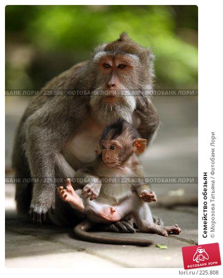 Купить «Семейство обезьян», фото № 225808, снято 24 февраля 2008 г. (c) Морозова Татьяна / Фотобанк Лори