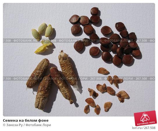 Семена на белом фоне, фото № 267508, снято 26 апреля 2008 г. (c) Заноза-Ру / Фотобанк Лори