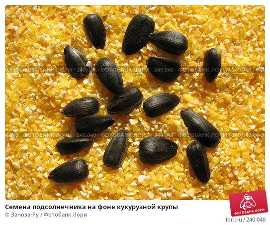 Семена подсолнечника на фоне кукурузной крупы, фото № 240040, снято 31 марта 2008 г. (c) Заноза-Ру / Фотобанк Лори