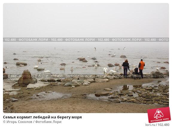 Семья кормит лебедей на берегу моря, фото № 102480, снято 23 июля 2017 г. (c) Игорь Соколов / Фотобанк Лори