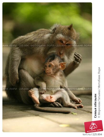 Купить «Семья обезьян», фото № 225804, снято 24 февраля 2008 г. (c) Морозова Татьяна / Фотобанк Лори